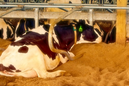 7 Reasons Cow Pies are Actually Awesome | Milk Means More blog