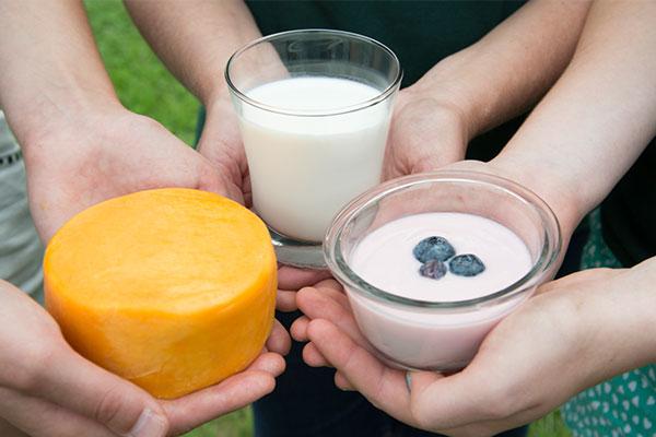 milk-cheese-yogurt-in-hands