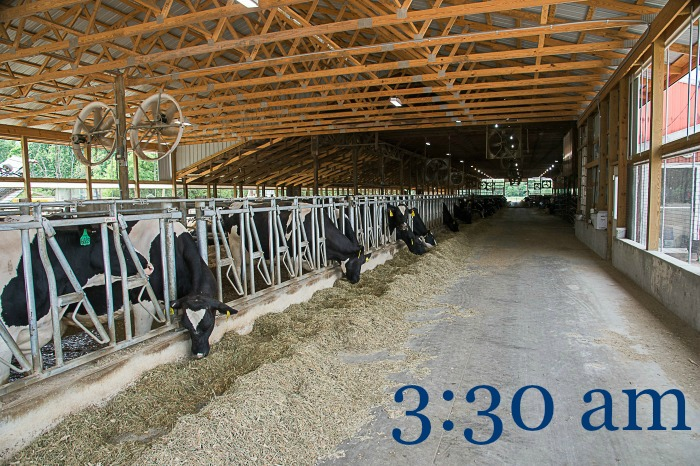 Day in the Life of a Dairy Farmer