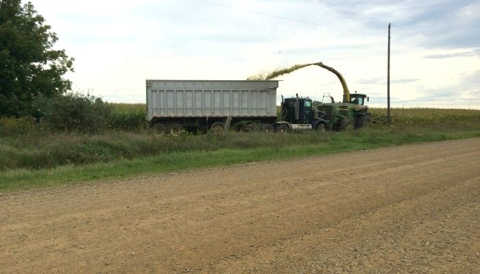 What MI Cows Eat Harvesting Corn Silage on a Michigan dairy farm