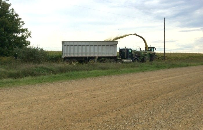 What MI Cows Eat Harvesting Corn Silage on a Michigan dairy farm