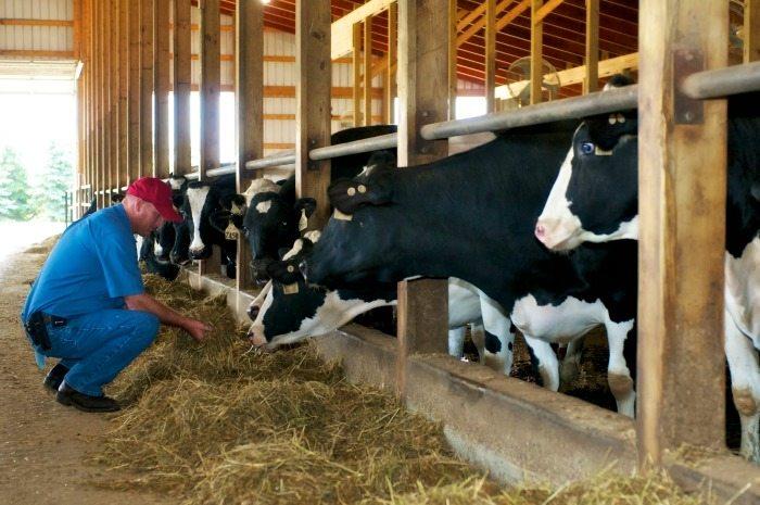 World Milk Day June Dairy Month