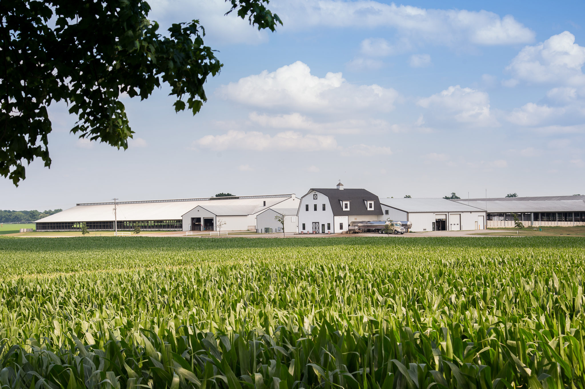 Machine Learning Dairy Farming